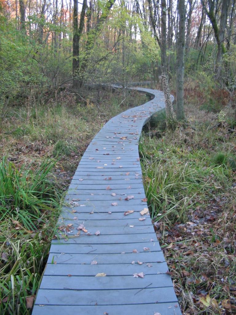 Pruyn boardwalk through Gedney Swamp. Photo: SMRA/Anne Swaim