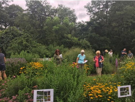 A view of the small Plants for Birds native meadow demonstration garden at Pruyn Sanctuary. Photo: SMRA