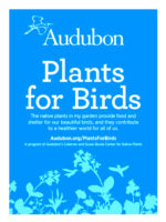 In 2018, the Plants for Birds demonstration meadow garden was established with a grant from National Audubon's Susan and Coleman Burke Center for Native Plants.