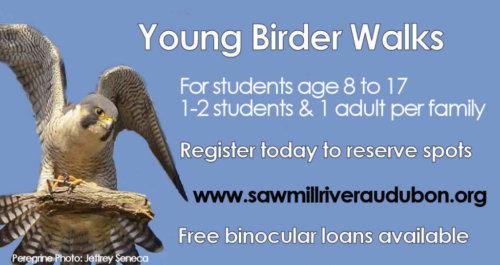 FB-Young-Birder-Walks