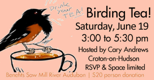 FB-ad-Birding-Tea